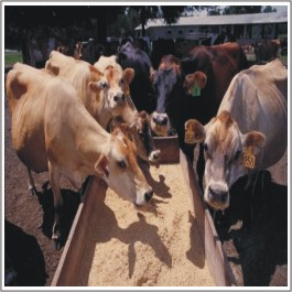 Livestock Management Food Course in Rawalpindi