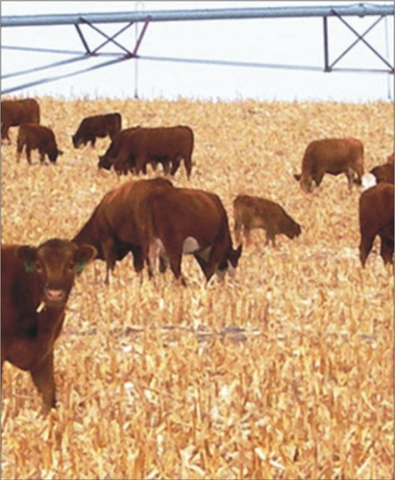Livestock Management Food Course In Rawalpindi, Pakistan